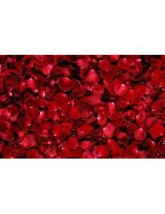 Pétalos rosas rojas...